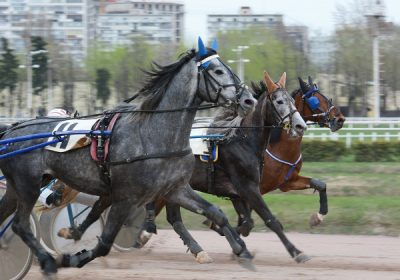 Harness Racing at the 2017 Fair