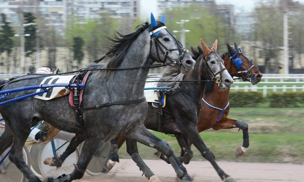 Harness Racing at the 2018 Fair